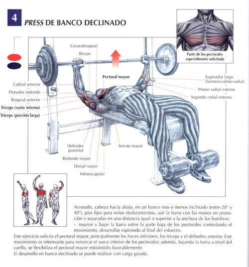 aumentar masa muscular en pectorales