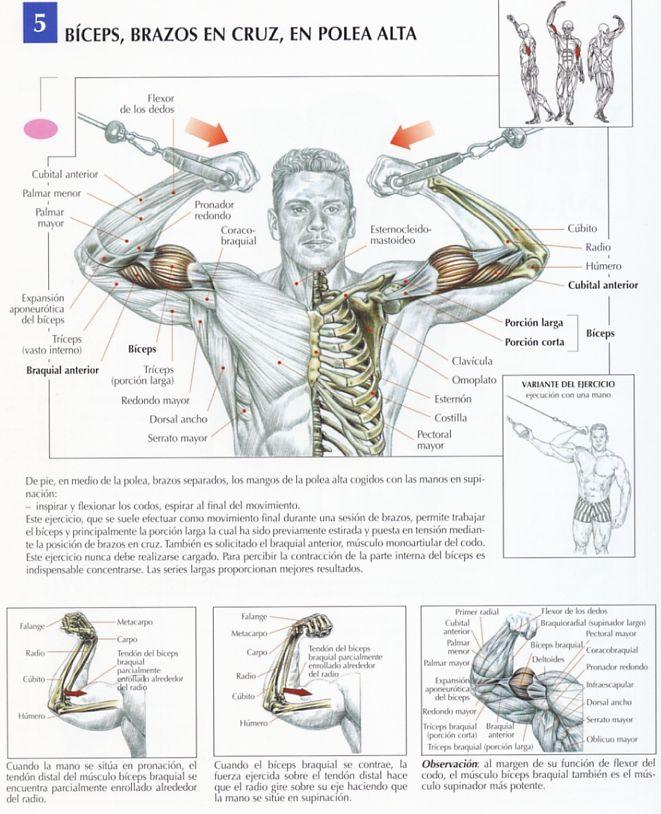 Bíceps en polea alta con los brazos en cruz