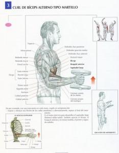 curl-biceps-alterno-tipo-martillo