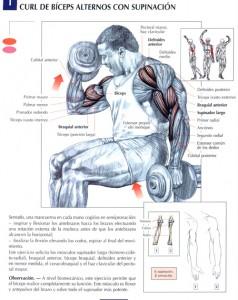 curl con mancuerna - ejercicios para brazos
