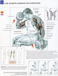 Curl de bíceps - ejercicios con mancuerna