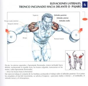 elevación lateral mancuerna