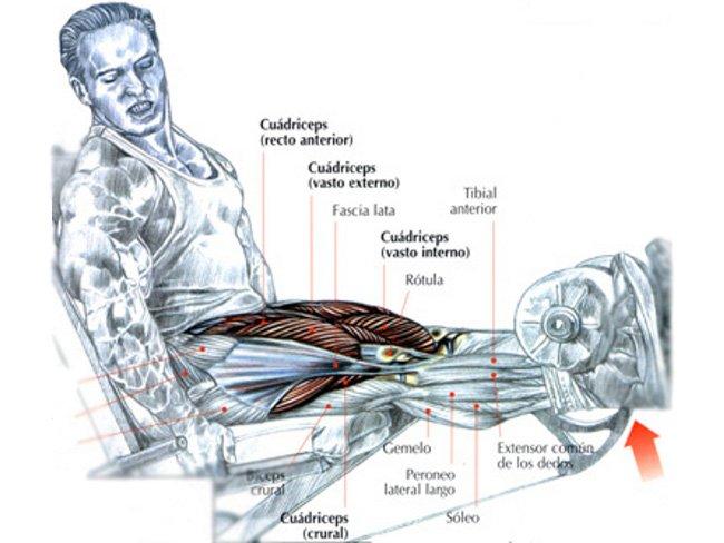 esteroides para marcar musculos