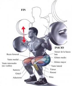 Aumento de la masa muscular