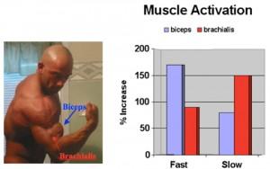 brazos masa muscular