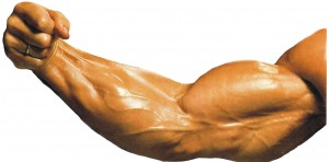 estiramientos para biceps