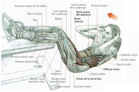 Rutina para definir el abdomen